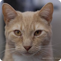 Adopt A Pet :: Tawny - Long Beach, NY