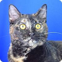 Adopt A Pet :: Sakura - Carencro, LA