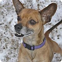 Adopt A Pet :: Evan - Meridian, ID