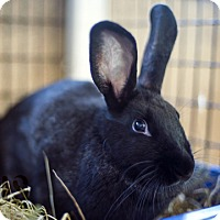 Adopt A Pet :: Shelly - Burlingame, CA