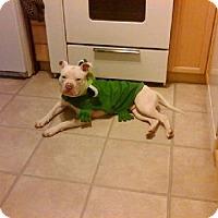 Adopt A Pet :: Jack ♥ - Livonia, MI