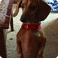Adopt A Pet :: Margot - Livonia, MI