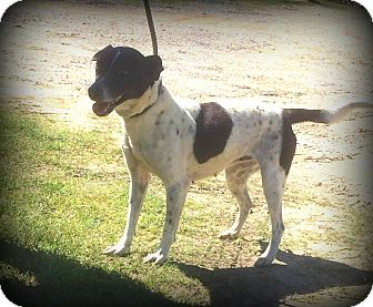 Rat Terrier Mix Dog for adoption in Demopolis, Alabama - Lizzie