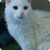 Adopt A Pet :: Iceberg - Duluth, MN