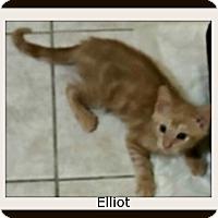 Adopt A Pet :: Elliot - Tombstone, AZ