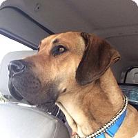 Adopt A Pet :: Duke - Valparaiso, IN