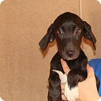 Adopt A Pet :: Wendy - Oviedo, FL