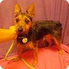 Adopt A Pet :: *MIKO