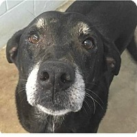 Adopt A Pet :: Rita - Springdale, AR