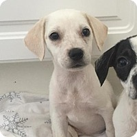 Adopt A Pet :: Lynda - Austin, TX