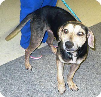 Hound (Unknown Type) Mix Dog for adoption in Eastpoint, Florida - Spam