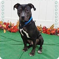 Adopt A Pet :: CARSON - Marietta, GA