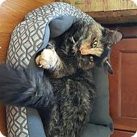 Adopt A Pet :: Ginger - CARVER, MA