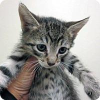 Adopt A Pet :: Vinny - Wildomar, CA