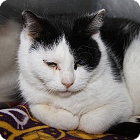 Adopt A Pet :: Emily (Spayed) - Marietta, OH