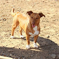 Adopt A Pet :: Maya - Muldrow, OK