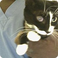 Adopt A Pet :: Lois - Boca Raton, FL