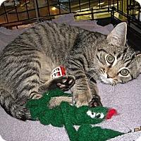 Adopt A Pet :: Rafe - Arlington, VA