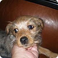 Adopt A Pet :: Charlotte - Apex, NC