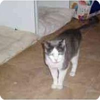 Adopt A Pet :: Casey Kassem - Hamburg, NY
