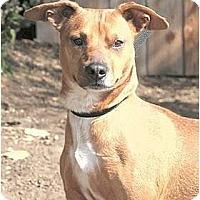 Adopt A Pet :: Suzi-Q - Santa Barbara, CA