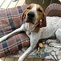 Adopt A Pet :: Rhonda - Leesburg, VA