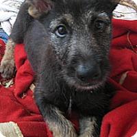 Adopt A Pet :: Rosemary - Phoenix, AZ