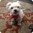 Adopt A Pet :: Phillip