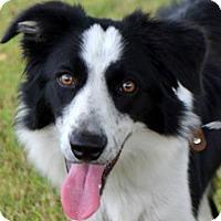 Adopt A Pet :: Montana - Garland, TX