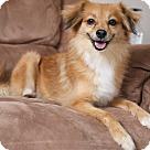 Adopt A Pet :: Melody