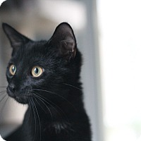 Adopt A Pet :: Raisin - Richmond, VA