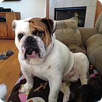 Adopt A Pet :: Spike - Park Ridge, IL