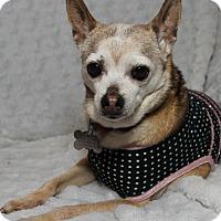 Adopt A Pet :: Oblina - Boise, ID