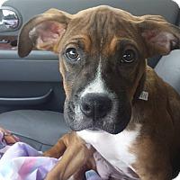 Adopt A Pet :: Jett - Westminster, MD