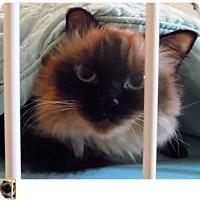 Adopt A Pet :: Pia Maria - Gilbert, AZ