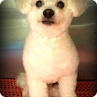 Adopt A Pet :: Toby - Glastonbury, CT