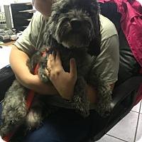Adopt A Pet :: Rocky - Bradenton, FL