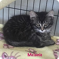 Adopt A Pet :: Melanie - Baton Rouge, LA