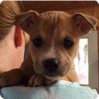 Adopt A Pet :: Margarita - Barnegat, NJ