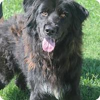Adopt A Pet :: Rio (Needs foster/Has application) - Washington, DC