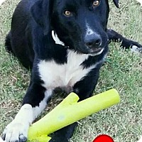 Adopt A Pet :: Zeus - Elgin, OK