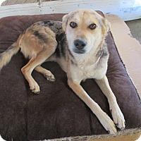 Adopt A Pet :: Buddy - Lancaster, CA