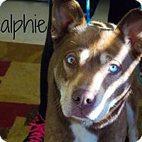 Adopt A Pet :: Ralphie - Defiance, OH