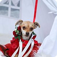 Adopt A Pet :: Trixie - Auburn, CA