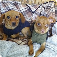 Adopt A Pet :: Adorable Prancer&Dancer - Los Angeles, CA