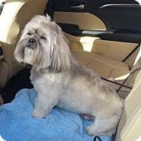 Adopt A Pet :: Zak - Huntley, IL
