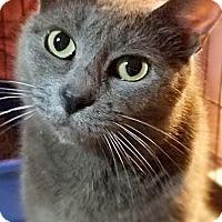 Adopt A Pet :: Viola - Philadelphia, PA