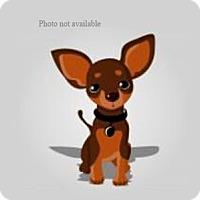 Adopt A Pet :: URGENT ON 2/28  San Bernardino - San Bernardino, CA