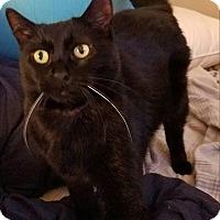 Adopt A Pet :: Lady Rowena - Los Angeles, CA
