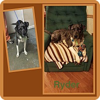 Adopt A Pet :: Ryder - Tower City, PA